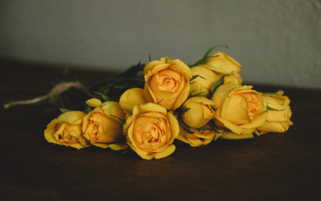 beautiful yellow roses given as a gift