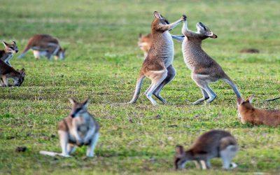 Guía del inglés de Australia (¡y todo lo que necesitas saber sobre los australianos!)