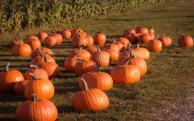 Trick or treat?: las celebraciones Halloween
